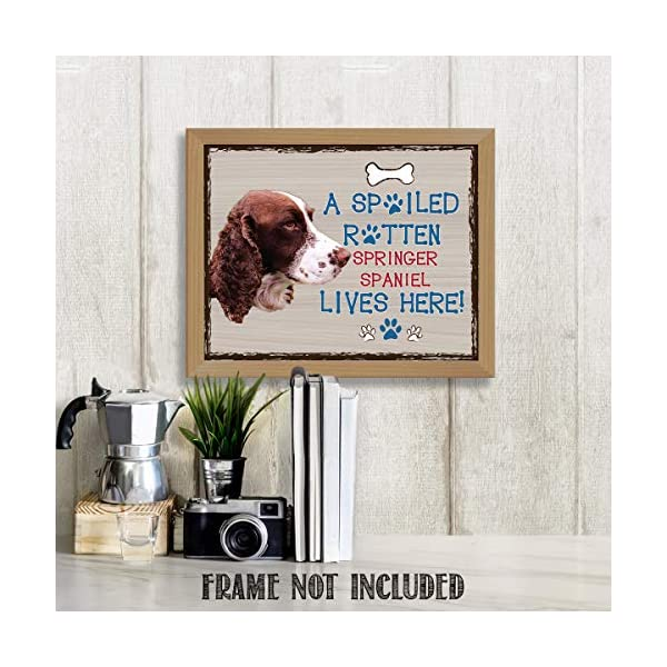 "Springer Spaniel-Dog Poster Print-10 x 8"" Wall Decor Sign-Ready To Frame.""A Spoiled Rotten Springer Spaniel Lives Here"". Pet Wall Art for Home-Kitchen-Garage. Gift-English Springer Spaniel Owners! 2"