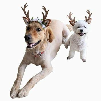 Lefu 2PCS Decoración de Navidad Mascota Gato Perro Diadema Navidad Reno Flores S: Amazon.es: Hogar