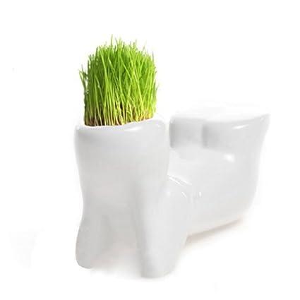 4 Shape Choose Diy Mini Novel Bonsai Grass Doll Hair White Lazy Man Plant Garden Garden Pots & Planters