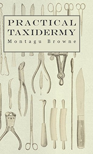 Practical Taxidermy - A Manual of Instruction to the Amateur in Collecting, Preserving, and Setting up Natural History Specimens of All Kinds. To ... Upon the Pictorial Arrangement of Museums (A Tree Up Christmas Setting)
