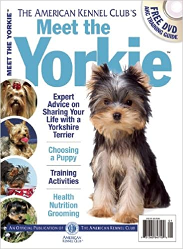 Meet The Yorkie Akc Meet The Breed Series American Kennel Club