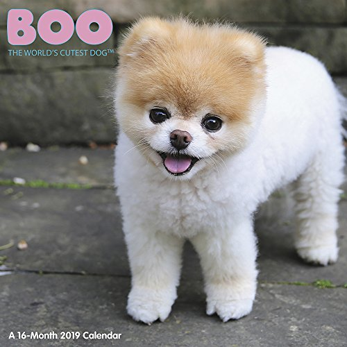 Price comparison product image Boo Wall Calendar (2019)