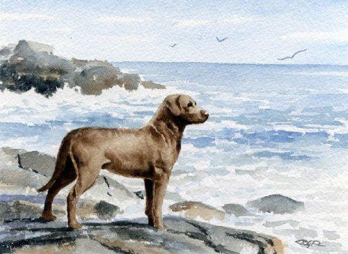 Chesapeake Bay Retriever Dog Art Print by Artist DJ Rogers