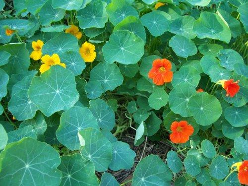 7 16 organic floral plugs - 6