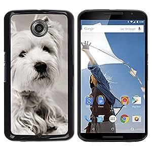 PC/Aluminum Funda Carcasa protectora para Motorola NEXUS 6 / X / Moto X Pro White Terrier Longhair Small Dog / JUSTGO PHONE PROTECTOR