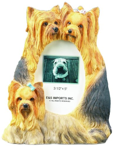 Pictures Yorkie (Yorkie  Picture Frame Holds Your Favorite 3 x 5 Inch Photo,  A Hand Painted Realistic Looking Yorkie  Family Surrounding  Your Photo. This Beautifully Crafted Frame is A Unique Accent To Any Home or Office. The Yorkie  Picture Frame Is The Perfect Gift For Yorkie  Owners And Lovers!)