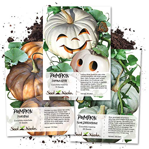 Seed Needs, Specialty Pumpkin Collection (3 Individual Seed Packets) Non-GMO (Best Pumpkin Seeds To Plant)