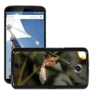 Hot Style Cell Phone PC Hard Case Cover // M00115581 Cicada Insect Bugs Close-Up Shell // LG Google Nexus 6