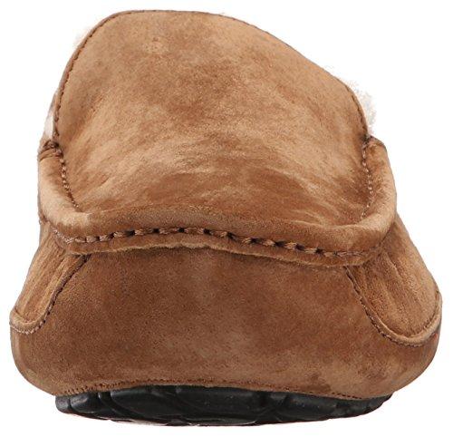 Slippers Brown Uomo Ascot Australia UGG pqEwaSOZE
