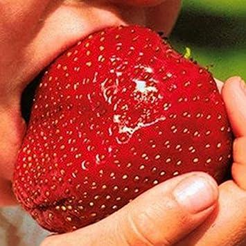Portal Cool Refresque Las Semillas Populares Populares al por Mayor de la Fresa 150Giant Alto Alto en Fruta de la Vitamina: Amazon.es: Jardín