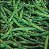 "140 Seeds, Pole Bean ""Blue Lake"" (Phaseolus vulgaris) Seeds By Seed Needs"