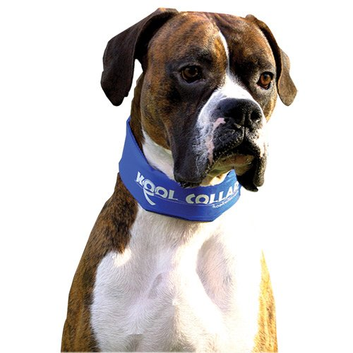 Kool Collar – Large in Blue (Includes one Kool tube), My Pet Supplies