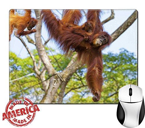 Orangutan Swings - 6