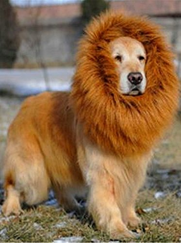 [T2C Large Pet Dog Cat Lion Wigs Mane Hair Festival Party Fancy Dress Clothes Costume(Brown, L)] (Rave Monster Costume)
