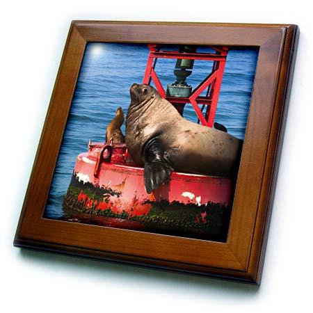 3dRose Danita Delimont - Sea Lions - Steller sea Lion on Harbor Buoy, Ventura, California, USA - 8x8 Framed Tile (ft_314703_1) ()