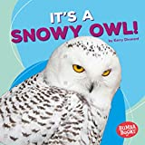 It's a Snowy Owl! (Bumba Books  - Polar Animals)