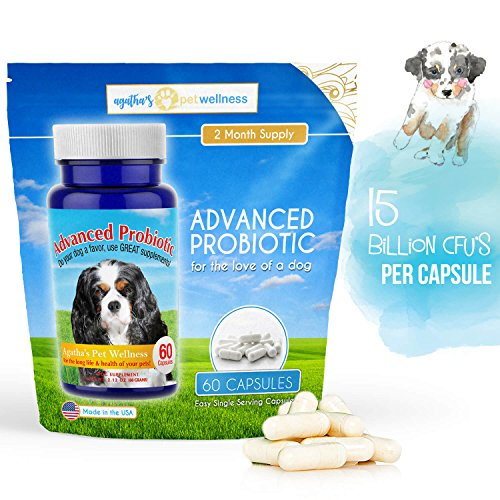 Cheapest Agatha's Pet Wellness Advanced Probiotic 2 Month Supply - 15 Billion/CFU 10 Strains Dog Health-Voted Best Dog Probiotic 2017 & 2018! Helps Digestion, IBS, Allergies, Dental Issues, Yeast, Diarrhea Check this out.