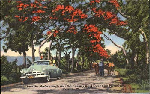 Where The Modern Meets The Old Flowers Original Vintage Postcard