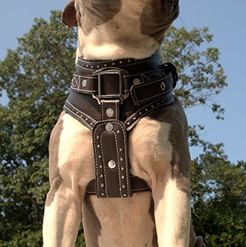 Decorative Leather Harness Harness Adjustable product image