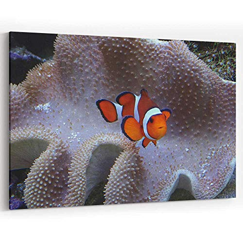 Image of Orange and White Clown Fish with Coral Anemone Canvas Prints Wall Art,Modern Home Decor