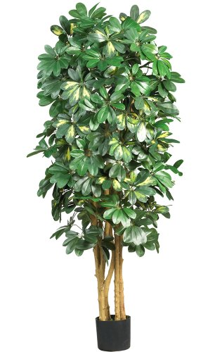 Nearly Natural 5202 Schefflera Silk Tree, 5-Feet, ()