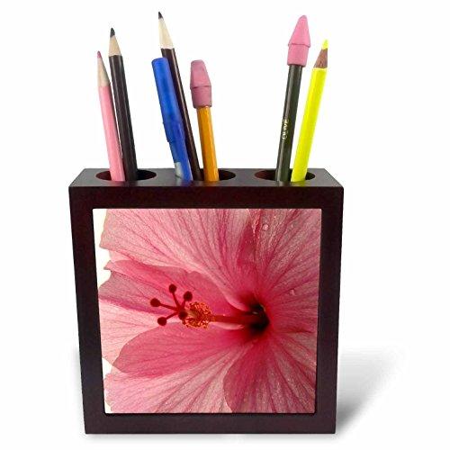 3dRose ph_7826_1 Dewey Pink Hibiscus-Tile Pen Holder, 5-Inch