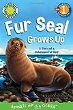 Galapagos Fur Seal, Victoria Sherrow, 1607277255