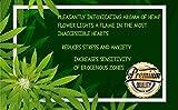 Massage Oil PheroCode 3.4 Fl. Oz with Cannabis