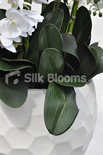 Grandes y llamativos Artificial blanco Fresh Touch orquídea ...