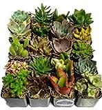 Fat Plants San Diego Succulent Plants (20)