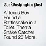 A Texas Boy Found a Rattlesnake in a Toilet. Then a Snake Catcher Found 23 More. | Sarah Larimer