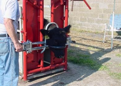 Head-Grip - Cattle Equipment