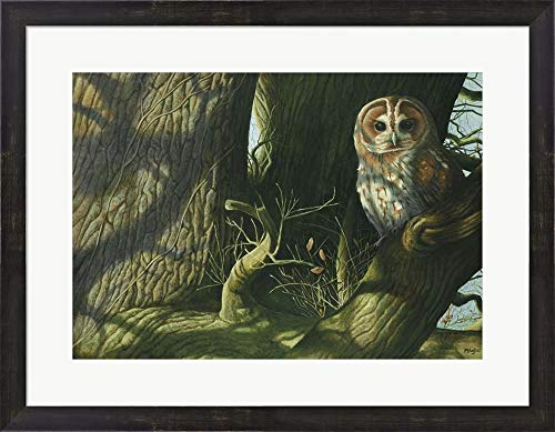 (Tawny Owl by Mike Hughes Framed Art Print Wall Picture, Espresso Brown Frame, 27 x 21 inches)