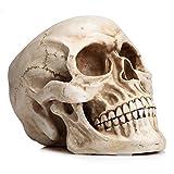 READAEER Life Size Human Skull Model 1:1 Replica