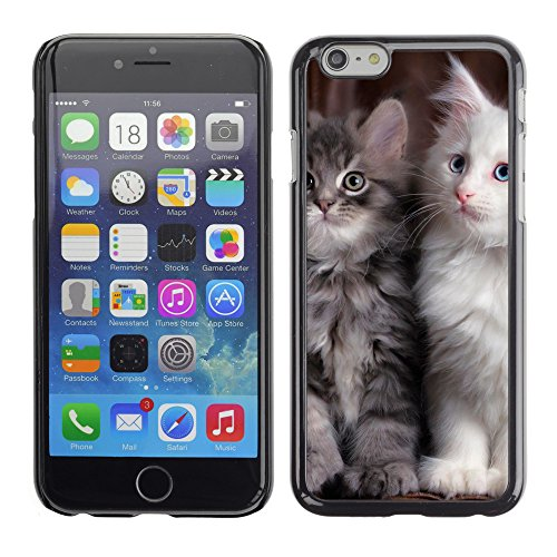 "Premio Sottile Slim Cassa Custodia Case Cover Shell // V00003621 maine coon chatons // Apple iPhone 6 6S 6G PLUS 5.5"""