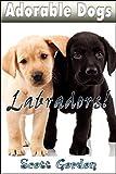 Adorable Dogs: Labradors (Heartwarming!)