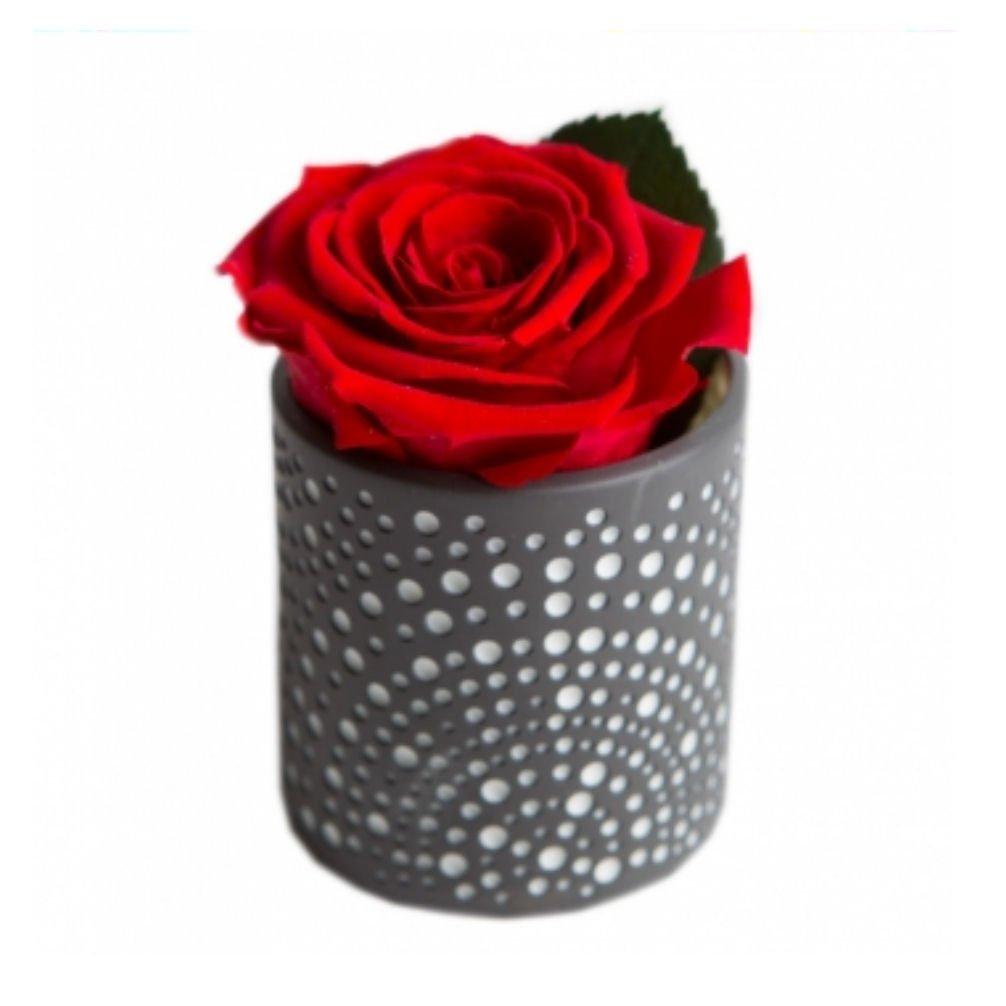 Echte haltbare Rose rot Diamant konservierte Blume im Porzellanwindlicht Geschenk Set CelebrationThe Rose of the Prince