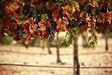 """LIMITED SUPPLY"" Shiraz Wooded Non-Alcoholic Wine"