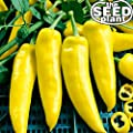Hungarian Wax Hot Pepper Seeds - 200 Seeds Non-GMO