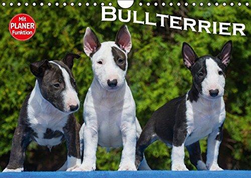 Bullterrier (Wandkalender 2016 DIN A4 quer): Bullterrier von klein bis groß auf 13 wundervollen Fotos (Geburtstagskalender, 14 Seiten ) (CALVENDO Tiere)