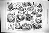 Old Original Antique Victorian Print 1883 Poultry Pigeon Show Crystal Palace Cochin Bantam Aylesbury B 265J420
