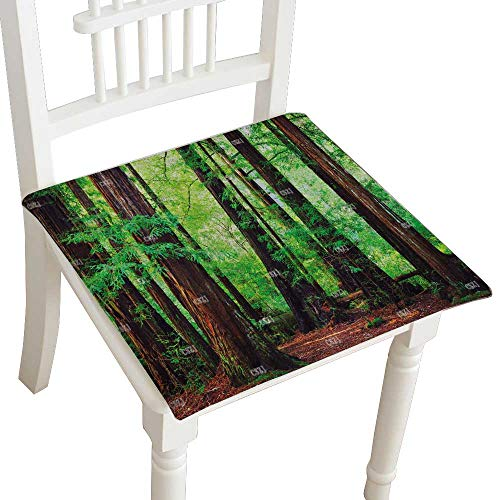 Indoor/Outdoor All Weather Chair Pads Stock Photo Redwood Trees in Forest Northwest rain Forest Seat Cushions Garden Patio Home Chair Cushions 28