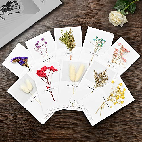 Christmas Cards Birthday Dried Flowers Greeting Cards-Blank Note Cards Birthday Note Thank You Cards Perfect for Business, Wedding, Graduation, Baby Shower(20Pcs) (Pressed Flower Cards)