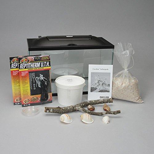 Land Hermit Crab Terrarium Habitat Kit (with Prepaid Coupon) by Carolina Biological Supply Company
