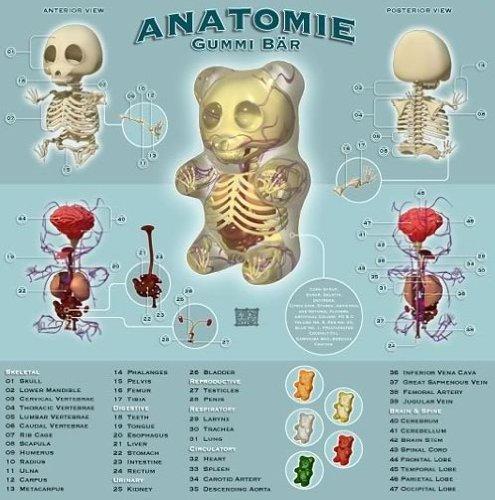 Die Visible-Gummy Bear Skeleton: Amazon.de: Elektronik