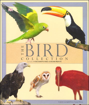 bird collection, the: includes 4 exclusive full-color prints Bird Collection