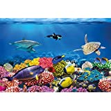 Undersea coral reef photo wall paper – aquarium fish sea mural – XXL undersea underwater world wall decoration - GREAT ART 55 Inch x 39.4 Inch