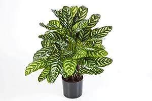 Planta artificial–67cm de alto Artificial Calathea M planta con hojas.