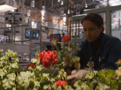 The Pinocchio in the Planter