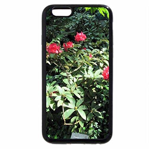 iPhone 6S / iPhone 6 Case (Black) Alberta botanical garden 42